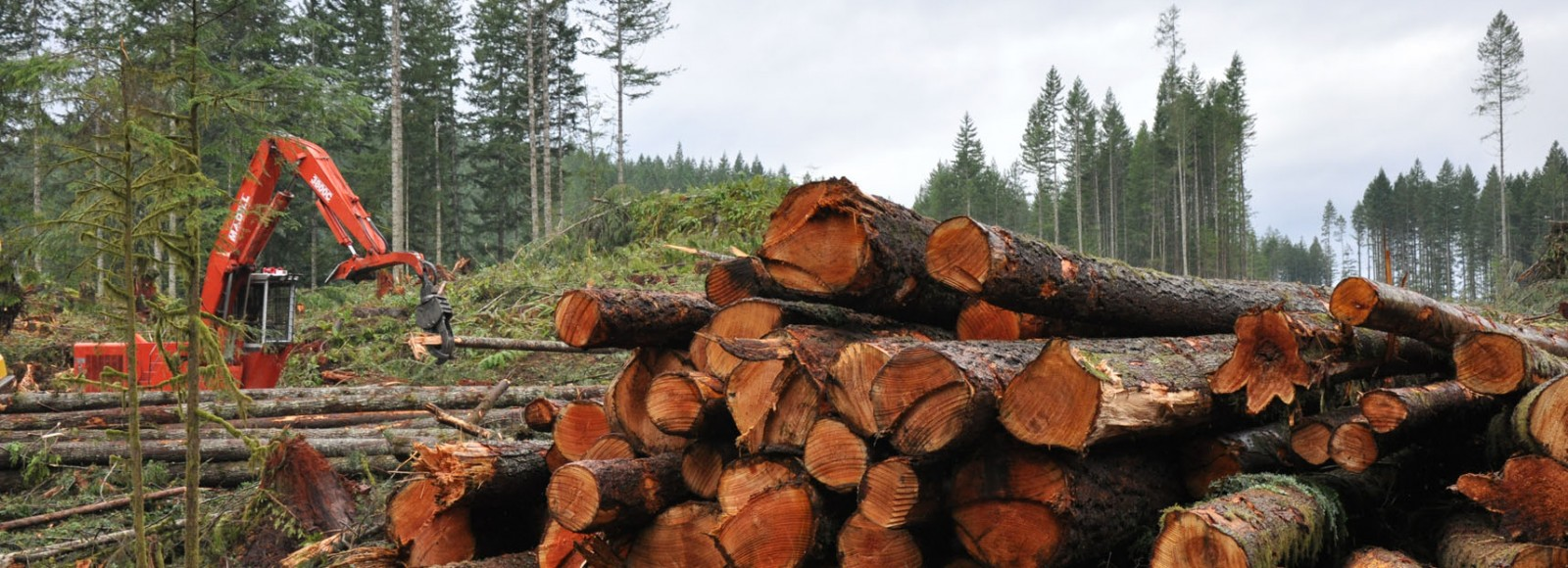 Olympic Forest Products | Powell River  Log Sorting and Grading